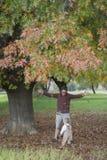 Père et fils jouant dans des feuilles d'automne photo stock