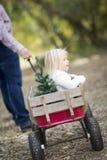 Père Pulls Baby Girl dans le chariot avec l'arbre de Noël Photos libres de droits