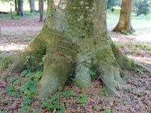 Pé da árvore Fotografia de Stock Royalty Free