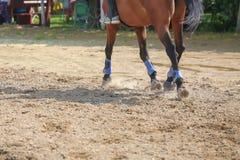 Pé do cavalo que corre na areia Feche acima do galope dos pés imagem de stock
