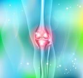 Pé e articulação do joelho humanos Imagem de Stock