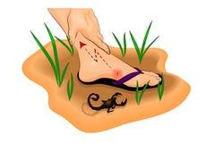Pé mordido por um escorpião, por uma dor e por um inchamento ilustração do vetor
