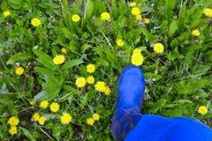 Pé nas botas de borracha que pisam as flores Imagens de Stock Royalty Free