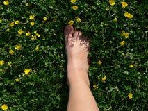 Pé que pisa na grama verde Fotos de Stock Royalty Free