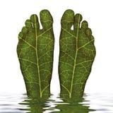Pé verde Imagens de Stock Royalty Free