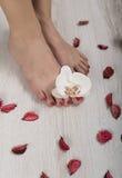 Pédicurie rouge de beau gel avec l'orchidée et les pétales autour Image libre de droits
