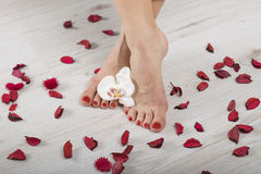 Pédicurie rouge de beau gel avec l'orchidée et les pétales autour, jambes croisées Photographie stock libre de droits