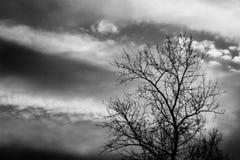 Pékin, photo noire et blanche de la Chine Arbre et ciel image stock