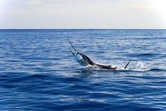 Pélerin de Marlin, l'océan pacifique, Costa Rica Photographie stock