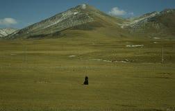 Pélerin seul au Thibet Photographie stock libre de droits