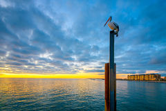 Pélican à la plage de Glenelg photographie stock libre de droits