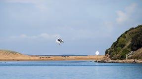 Pélican sur la rivière Photo stock