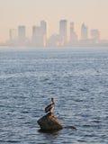 Pélican sur la roche à Tampa Bay Photographie stock libre de droits