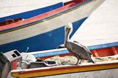 Pélican sur un bateau images libres de droits