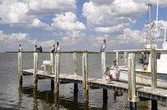 Pélicans étés perché sur un dock Image libre de droits
