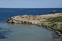 Pélicans au cap d'île de pingouin dans Rockingham Images libres de droits