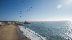 Pélicans volant au-dessus d'une plage avec de hautes falaises Photo stock