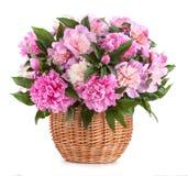 Péons de bouquet dans un panier d'isolement sur un fond blanc image stock