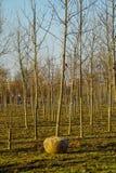 Pépinière avec le jeune arbre avec la balle de racine avant transport photos stock
