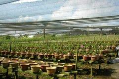 Pépinière d'orchidée Photo libre de droits