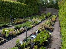 Pépinière de centrales de jardin avec l'irrigation Images stock