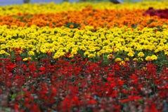 pépinière de fleur photo stock
