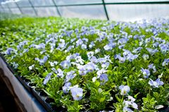 Pépinière de fleur de jardin de maison verte d'usine photo stock