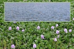 Pépinière de plantes aquatiques avec le calibre ouvert encadré de région de zone de texte Photos stock