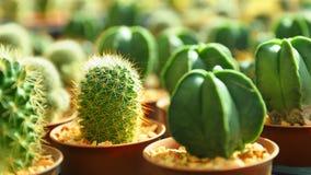 Pépinières d'usine de cactus photographie stock libre de droits