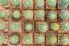 Pépinières d'usine de cactus dans la ferme Photos libres de droits