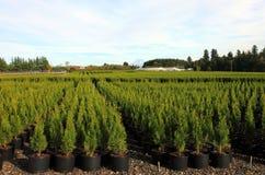 Pépinières de l'Orégon et centrales de plante photos libres de droits