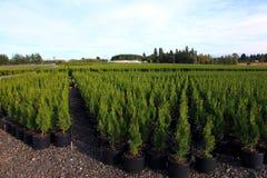 Pépinières de l'Orégon et centrales de plante images stock
