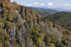 Pérdida de los colores y de la cicuta de la caída a lo largo del Ridge azul  Foto de archivo
