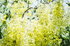 Périodes fleurissantes Image stock