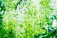 Périodes fleurissantes Photographie stock