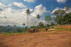 Périphéries du village indien Image libre de droits