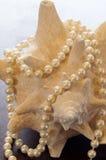 Pérolas em um shell Foto de Stock