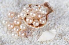 Pérolas no shell do mar Foto de Stock