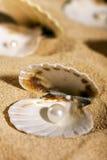 Pérolas nos seashells Fotografia de Stock