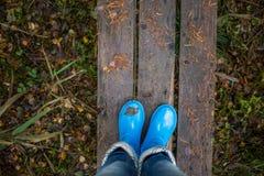 Pés da mulher em gumboots azuis contra as pranchas de madeira no fundo das folhas de outono Imagens de Stock