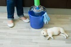 Pés da mulher que espremem o espanador perto do cachorrinho Foto de Stock Royalty Free