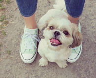 Pés da pata do cão ao lado do proprietário -- passeio junto (instagram Imagem de Stock Royalty Free