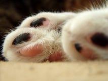Pés de gatos Imagens de Stock Royalty Free