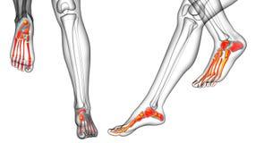 pés de osso Foto de Stock Royalty Free