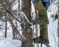 Pés de um homem que escala uma árvore com os montanhistas do polo em seus pés Inverno imagem de stock royalty free