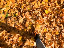 Pés delgados fêmeas nas calças de brim e nas botas, sapatas um fundo da folha amarela, seca, caída do outono folhas naturais Mult foto de stock