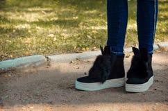Pés delgados nas calças de brim calçadas em botas da tendência com pele e orelhas na Fotografia de Stock Royalty Free