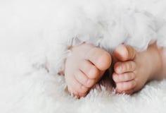 Pés do bebê Imagem de Stock Royalty Free