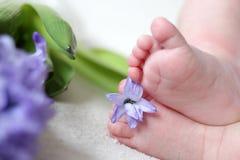 Pés do bebê nas flores Foto de Stock