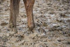 Pés do cavalo na lama Imagem de Stock Royalty Free